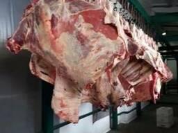 Halal Meat Beef Half/Quarter Carcasses