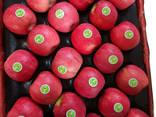 Best price fuji apple fresh fruit - photo 2