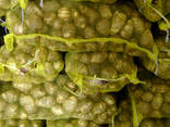 China best fresh taro - photo 2
