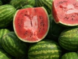 Fresh Watermelon Fruit with High quality From Vietnam