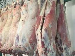 Halal Meat Mutton (Lamb) wholesale export
