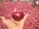 Onion - photo 1
