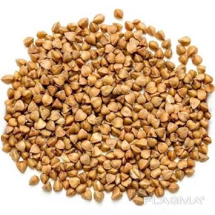 Organic Buckwheat Raw