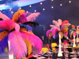 Ostrich feathers for decoration