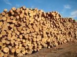 Softwood lumber - photo 6