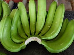 Vietnam fresh banana
